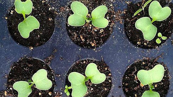 Картинки по запросу Преимущества выращивания растений из семян с детьми