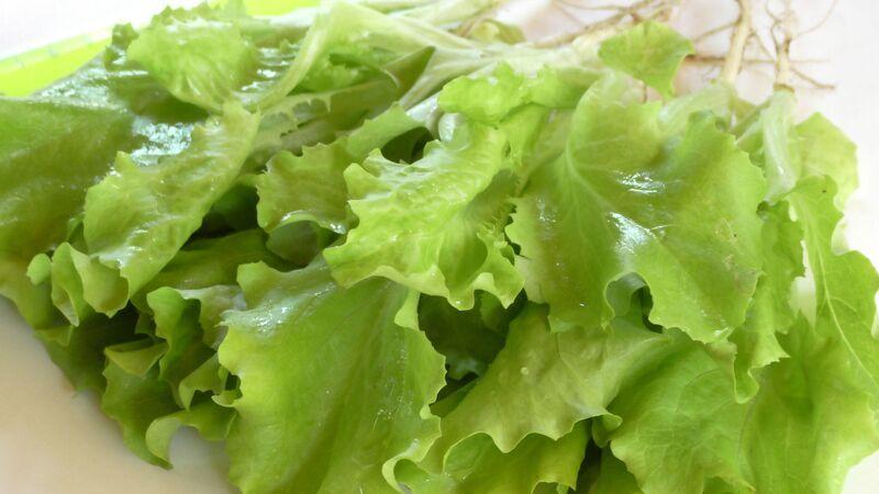 Выращивание листового салата фото