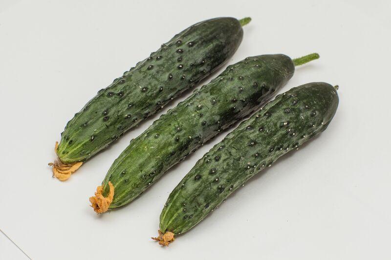 Огурец зозуленок f1 выращивание 89