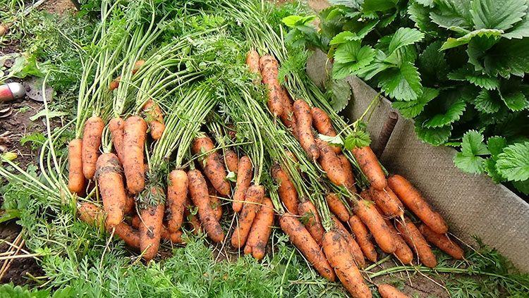 Когда и как сеять огородные культуры