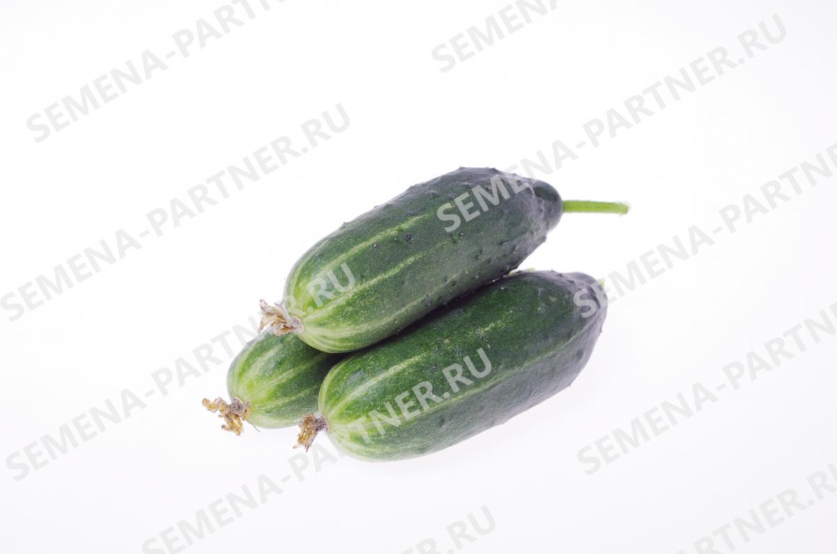 огурцы трюкач семена